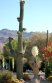 Cactus and flowering shrubs in Palm Springs